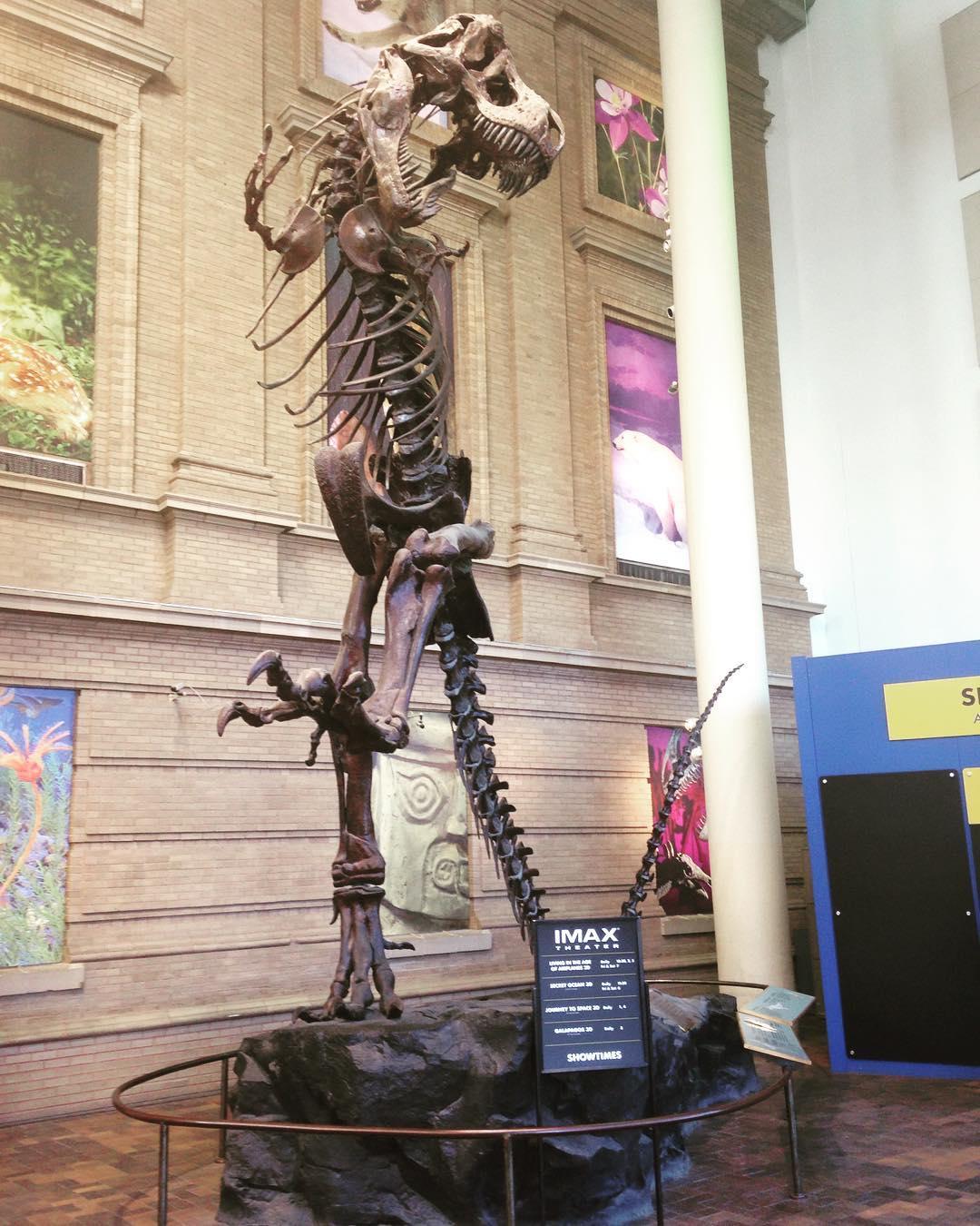 File:Tyrannosaurs Rex Cast Mount, Denver Museum Of Nature