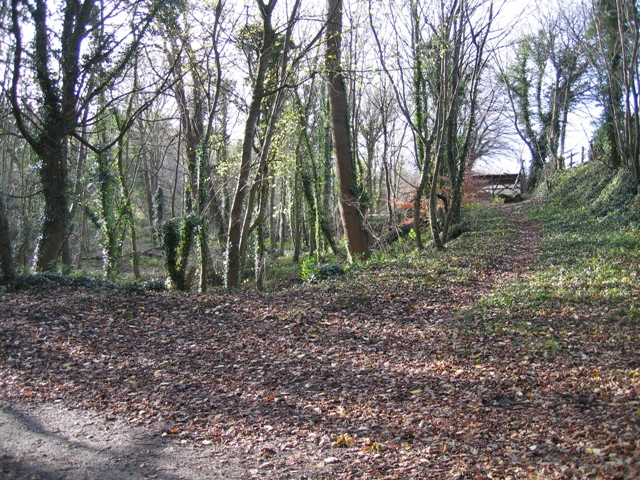 Woodland in Hawarden Park - geograph.org.uk - 628563