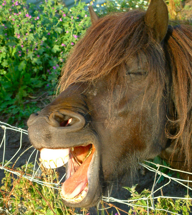 Image of: Stuffed Animals Free From Harm Horse Teeth Wikipedia