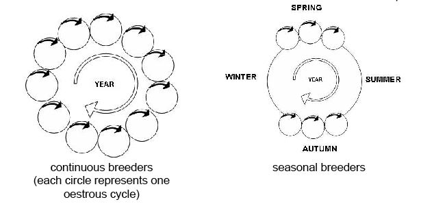 Anatomy and physiology of animals Breeding cycles.jpg