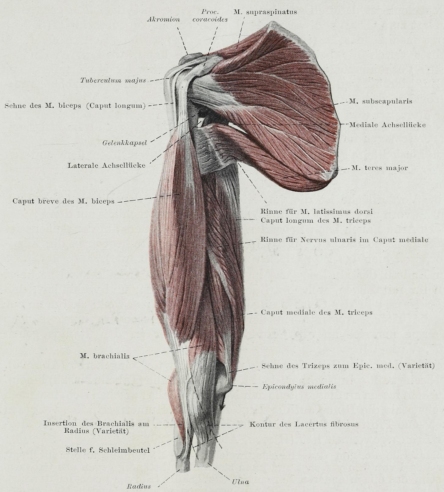 File:Braus 1921 167.png - Wikimedia Commons