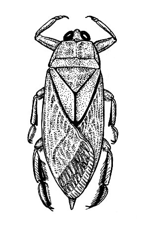 File:Bug2 (PSF).jpg