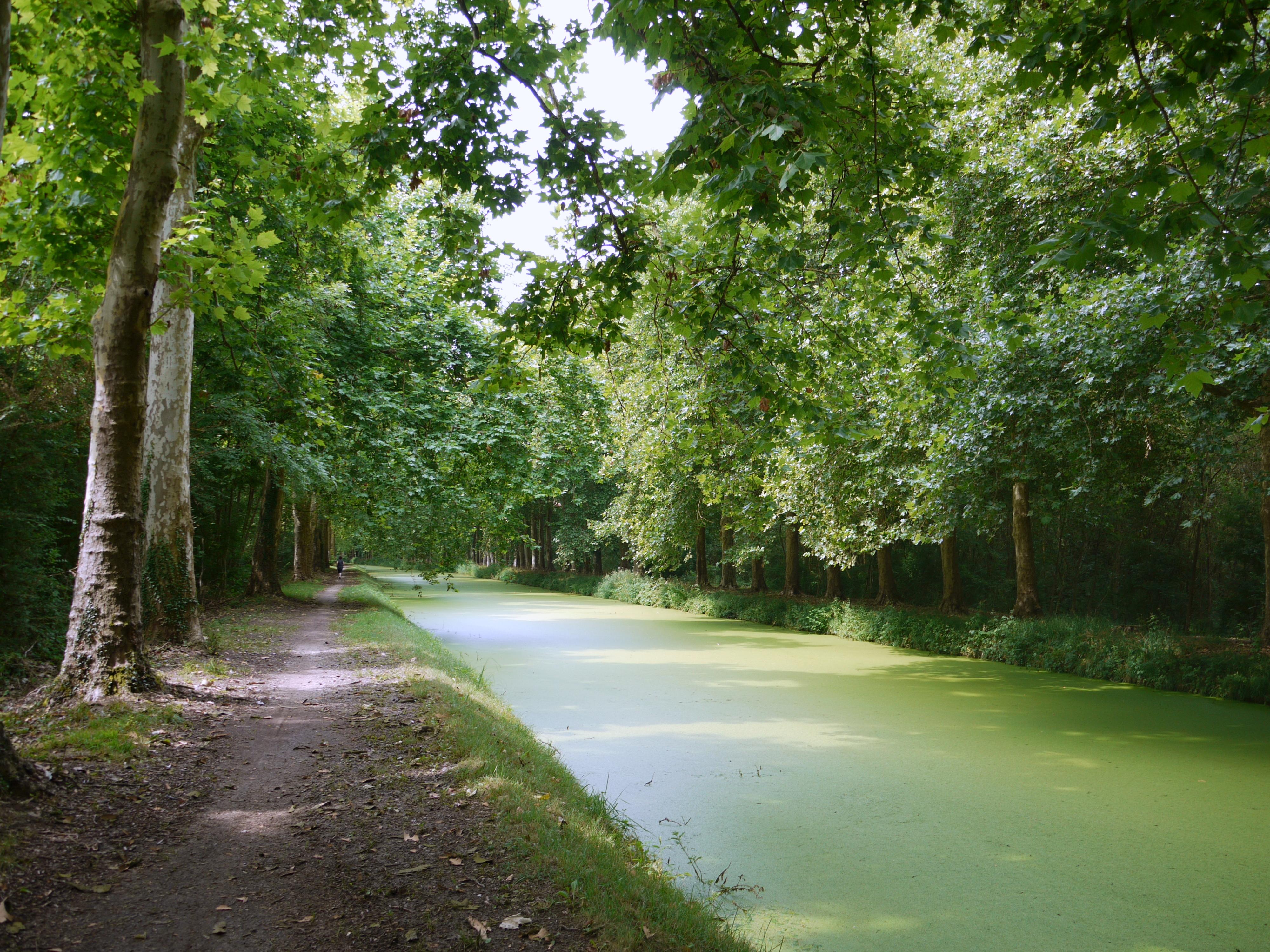 Maître D Oeuvre Orléans projet de restauration du canal d'orléans — wikipédia