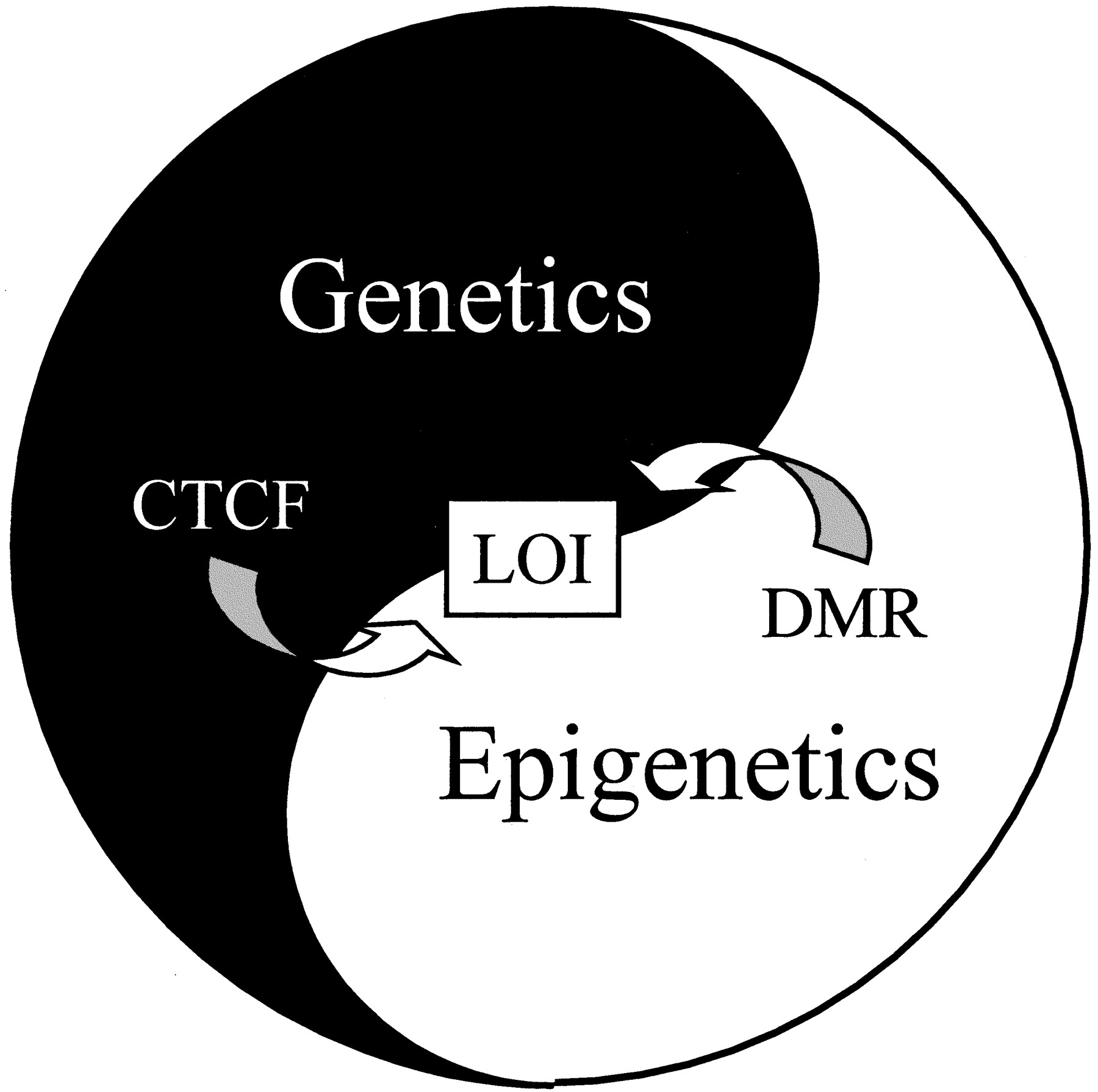 Image result for cancer epigenetics