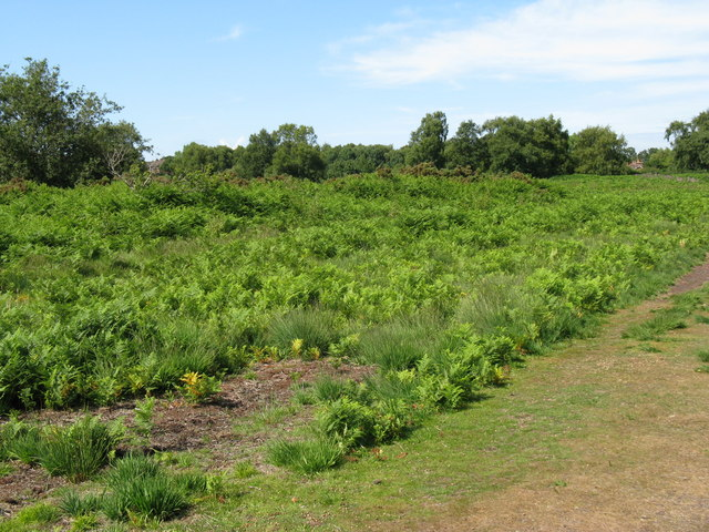 Chailey Common - geograph.org.uk - 1391050