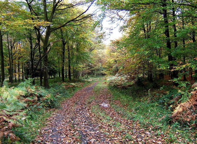 Corbets Park, Wyre Forest - geograph.org.uk - 1557240