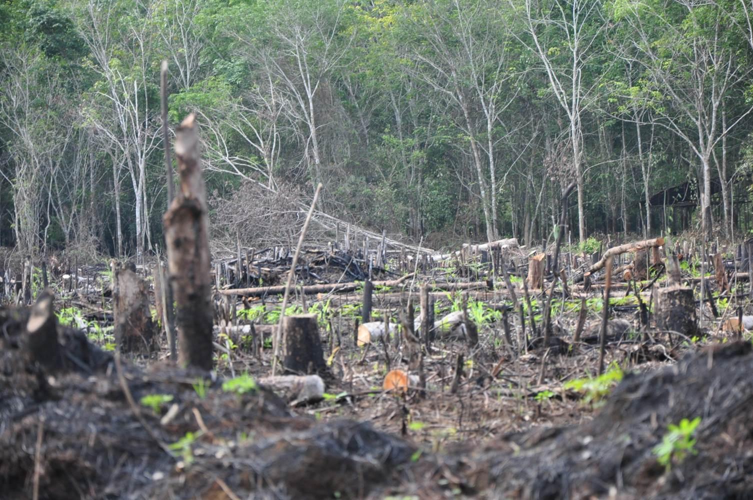 [Image: Deforestation_site_%2818418058486%29.jpg]
