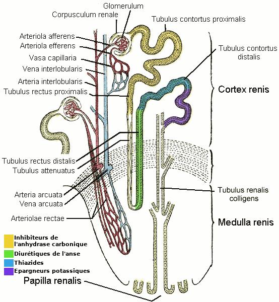 Les propriétés médicales du poivre noir par le pois des parasites
