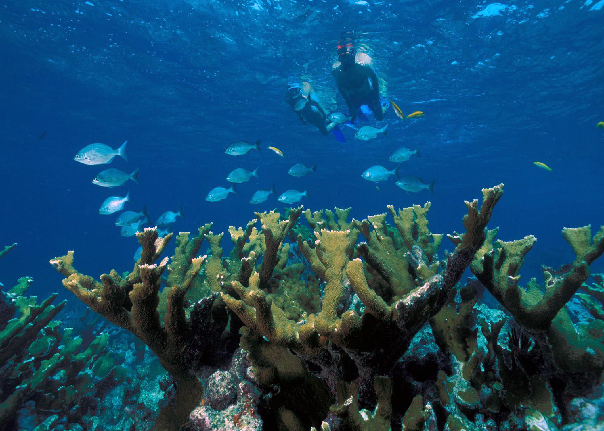 Scuba dive the US Virgin Islands