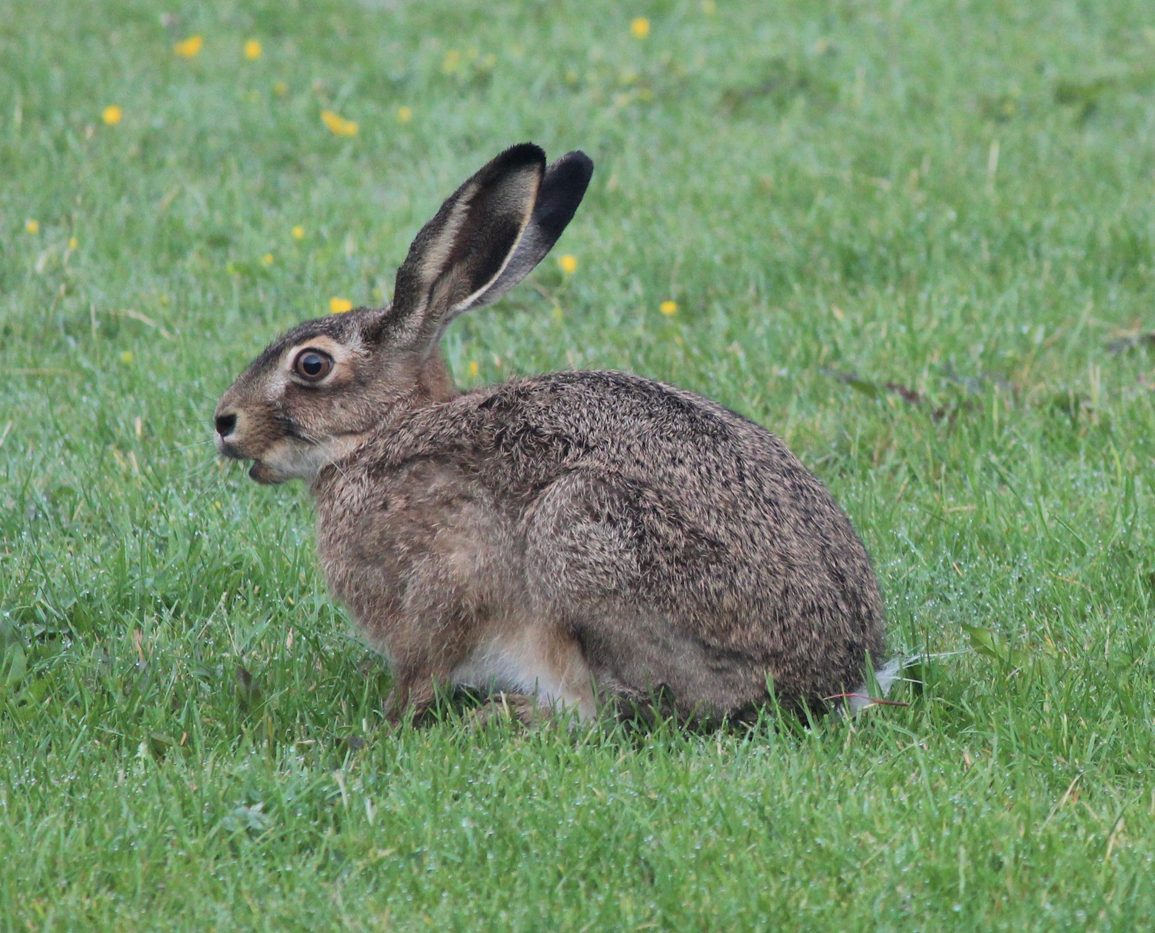 Hare And The Hound Restaurant Landrum South Carolina