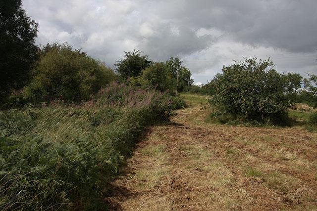 Ewyas Harold Common - geograph.org.uk - 1066400