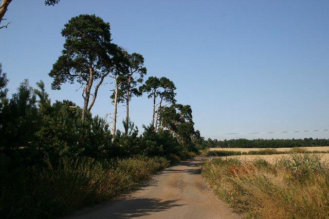File:Farm track at Icklingham - geograph.org.uk - 205328.jpg