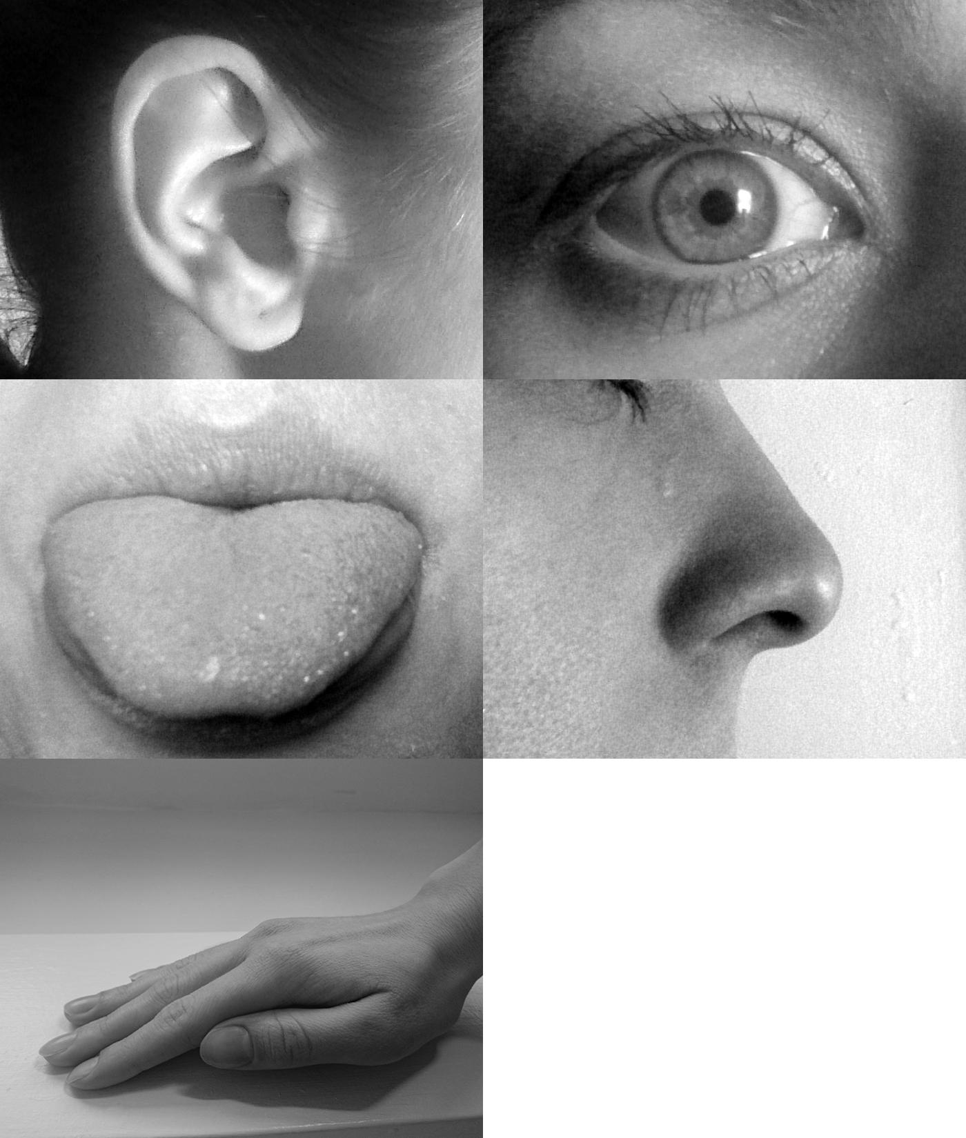 Navigator Neurons Play Critical Role In Sense Of Smell >> Sense Wikipedia