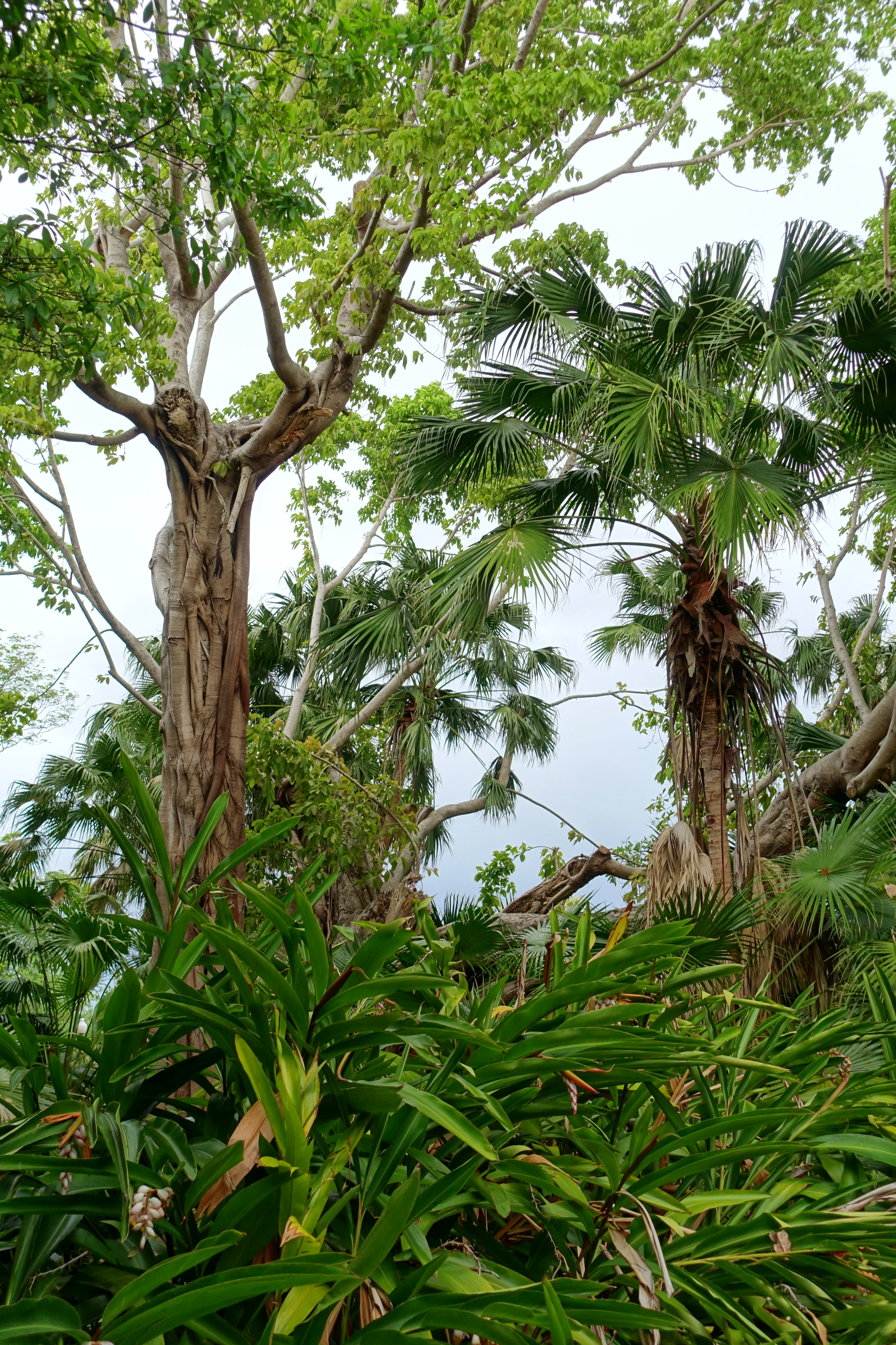 File:Foliage - McKee Botanical Garden - Vero Beach, Florida ...
