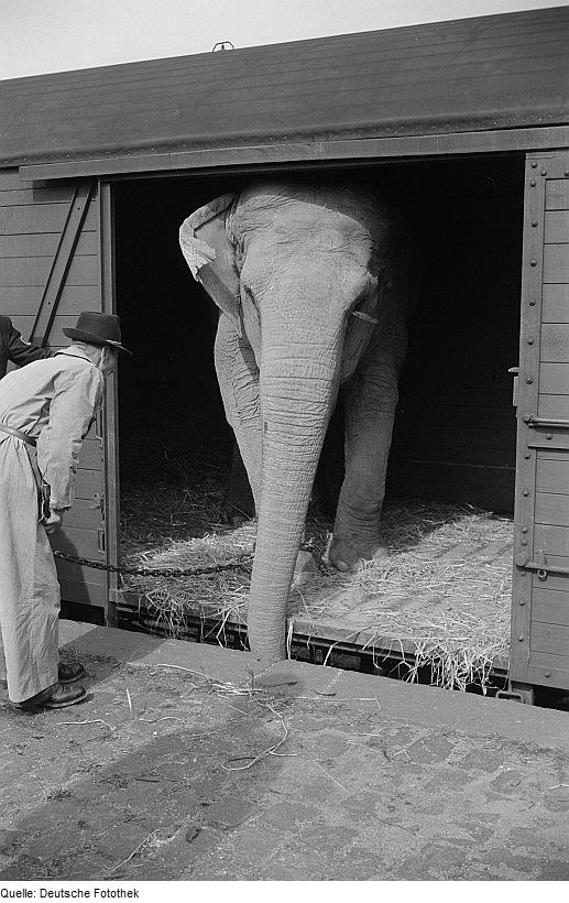 elefanten im schienenverkehr wikipedia. Black Bedroom Furniture Sets. Home Design Ideas