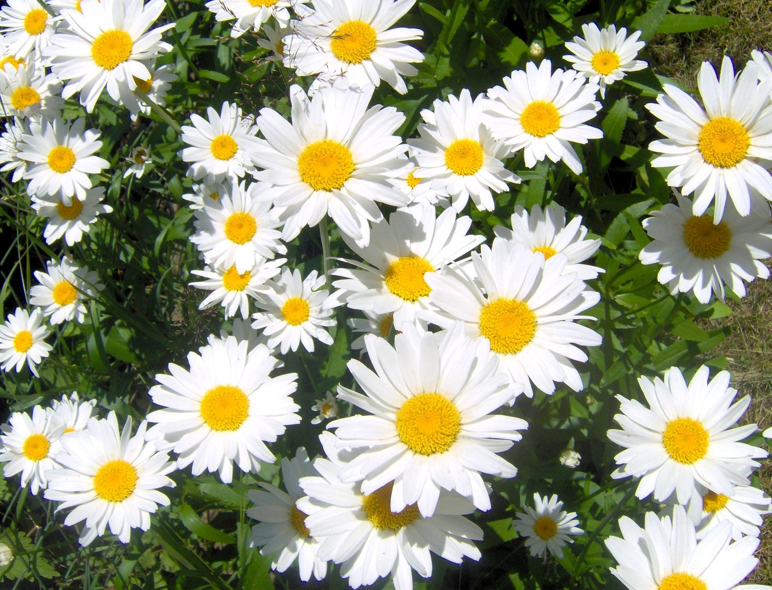 File Kwiaty Jpg Wikimedia Commons