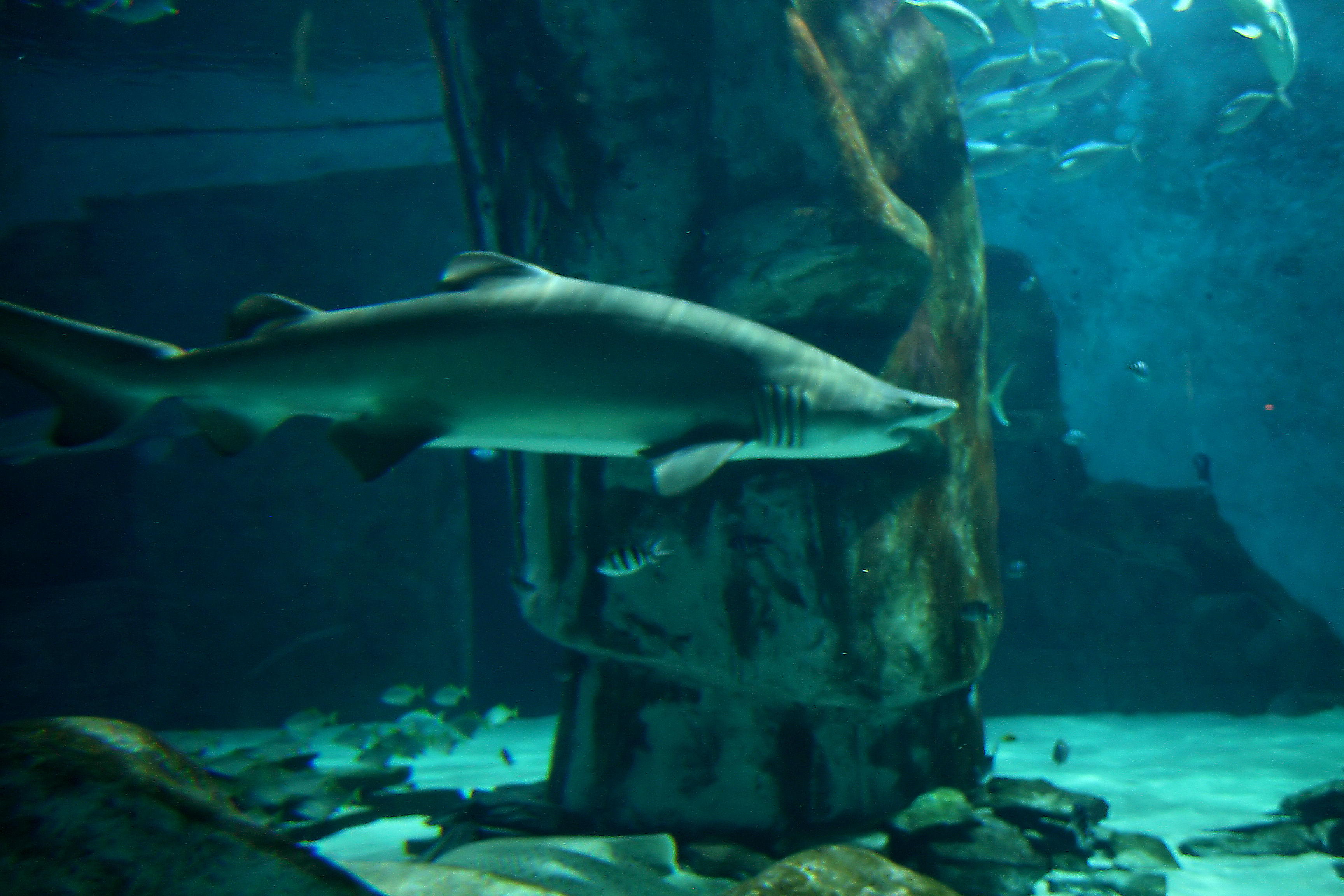 London Aquarium (539636520).jpg