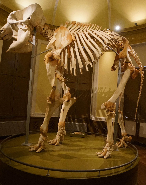 Ramon displayed as taxidermy specimen.