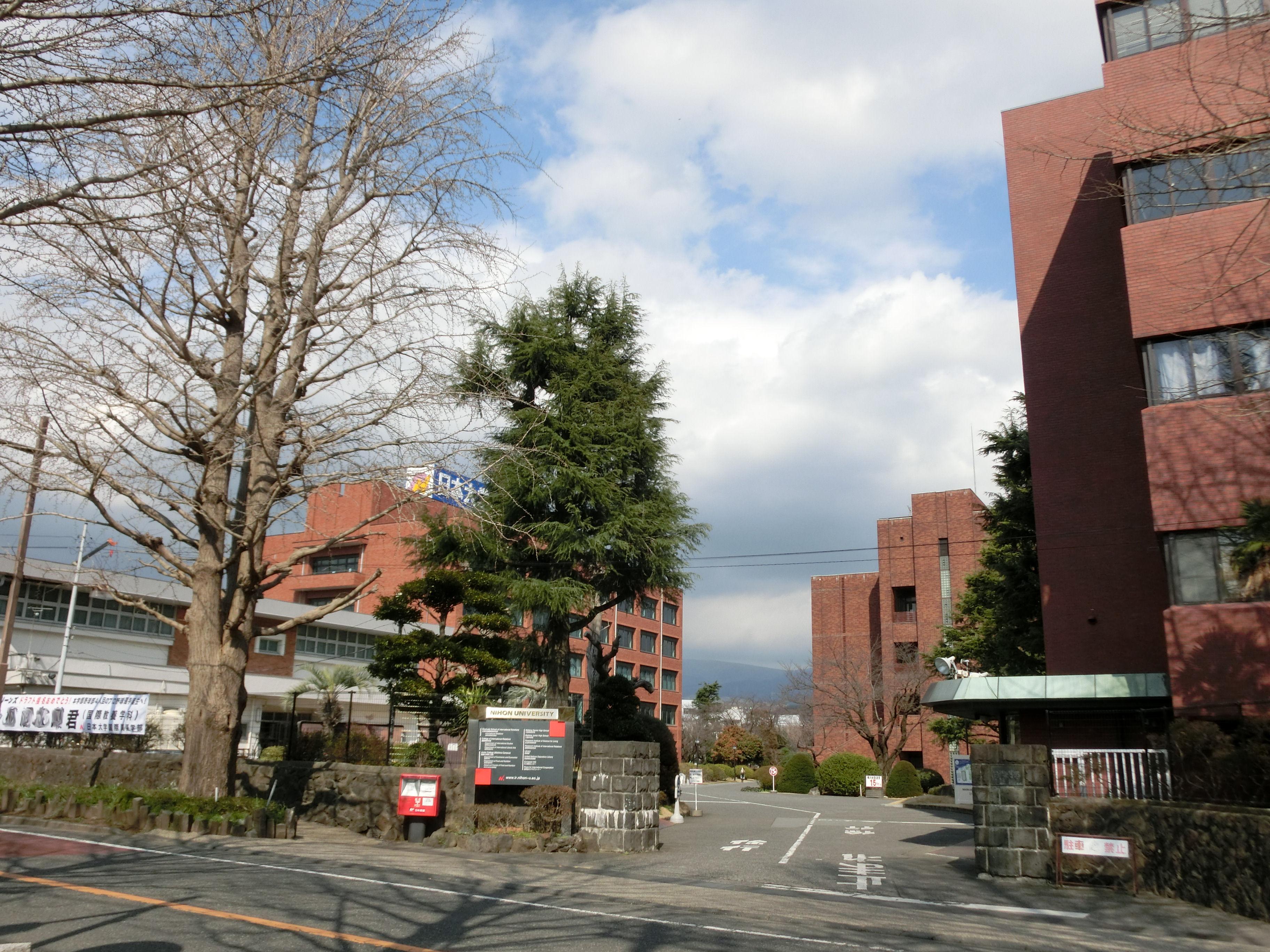 学部 日本 大学 国際 関係