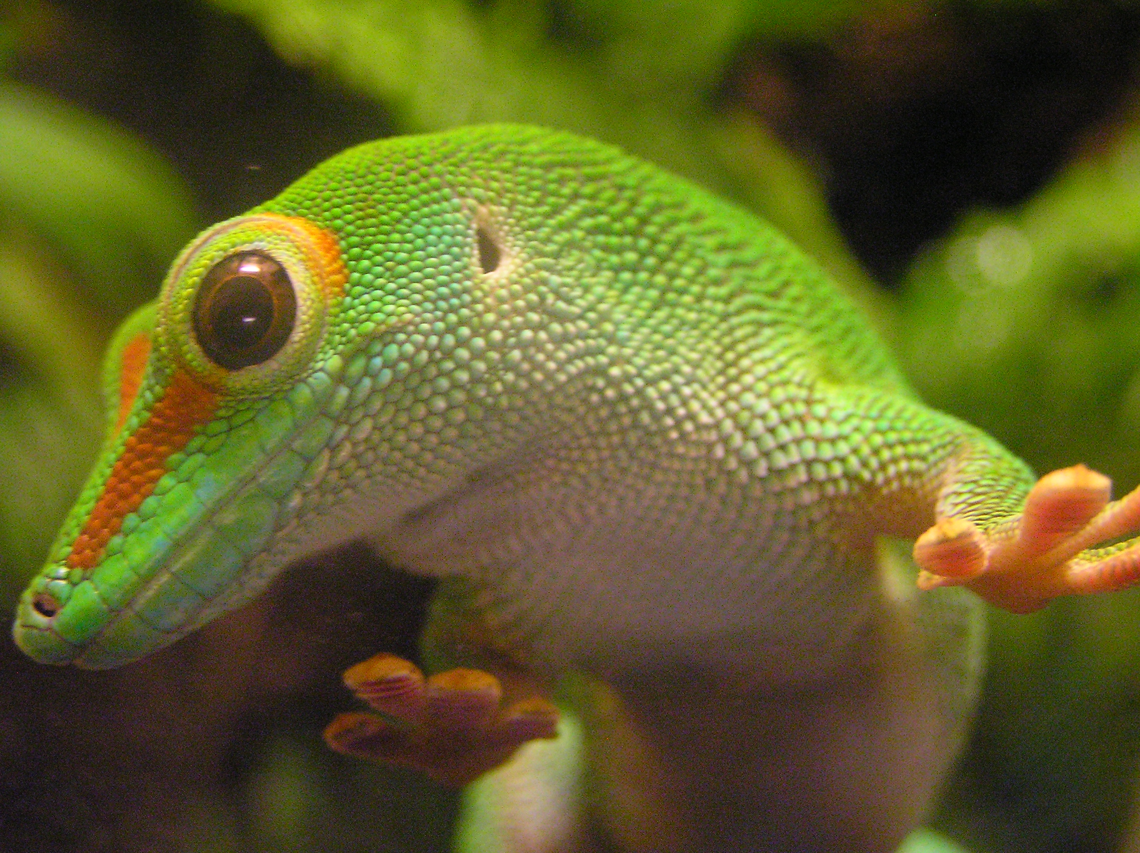 What Is Geico S Rank In Largest Car Insurances