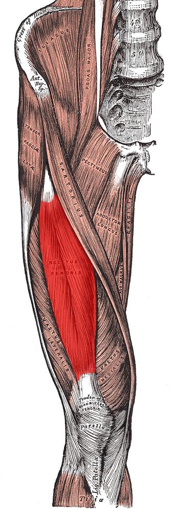 femoris - meddic