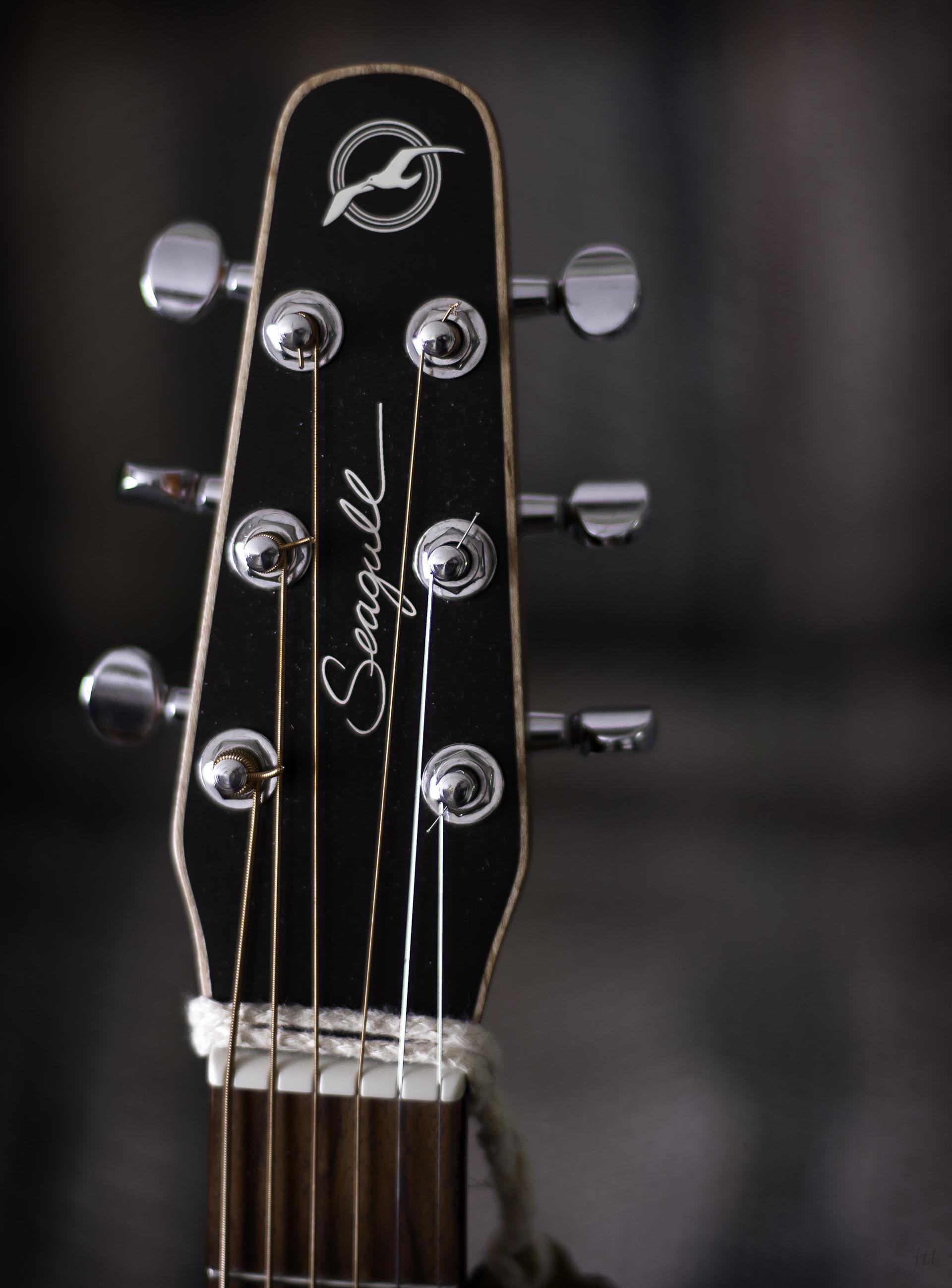 FileSeagull Guitar Headstock