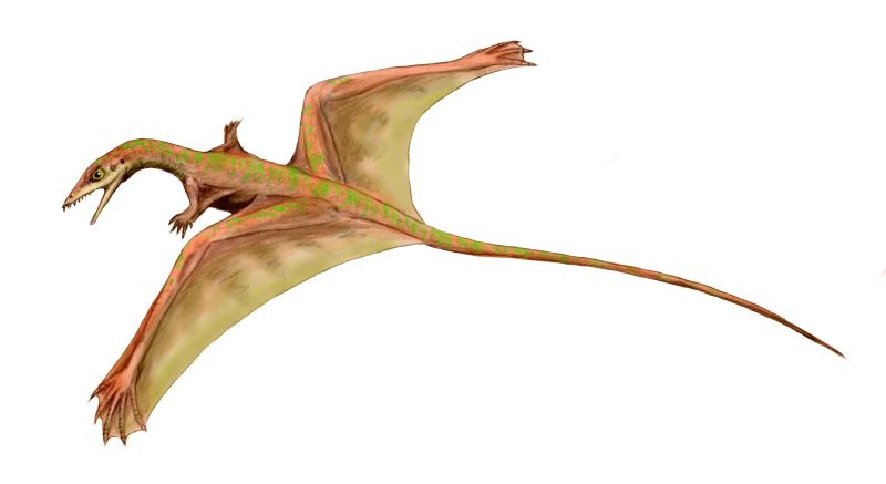 http://upload.wikimedia.org/wikipedia/commons/1/14/Sharovipteryx_BW.jpg