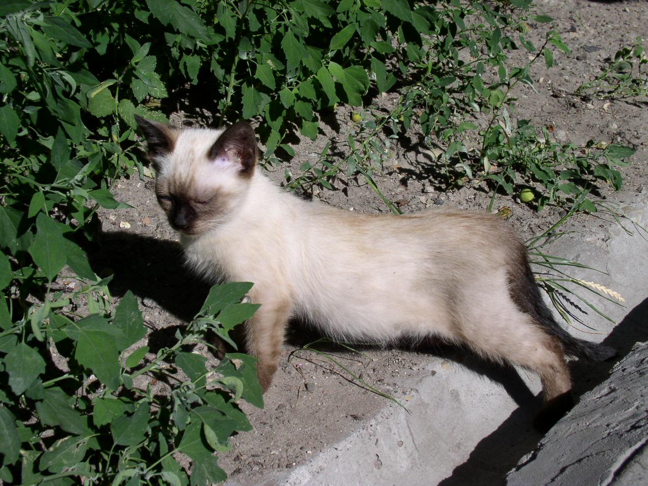 crazy cat lady pic