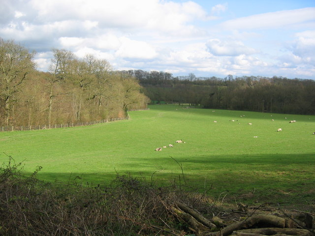 Tanhouse Wood and Fields - Toys Hill - geograph.org.uk - 151773