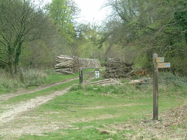 Timber stack on ride at Goodwood Estate - geograph.org.uk - 164167
