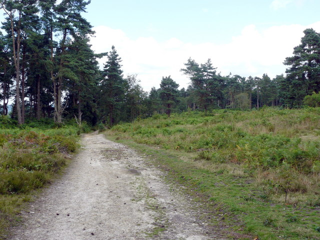 Track Near The Duke's Warren - geograph.org.uk - 1404929