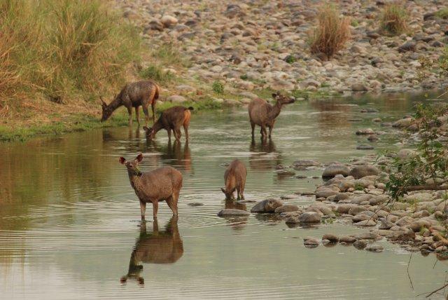 About Corbett National Park