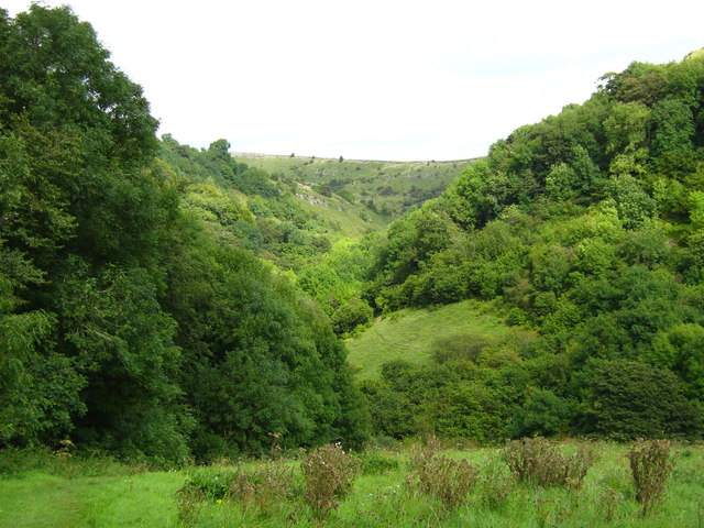 Woodland in Cressbrook Dale - geograph.org.uk - 1465202