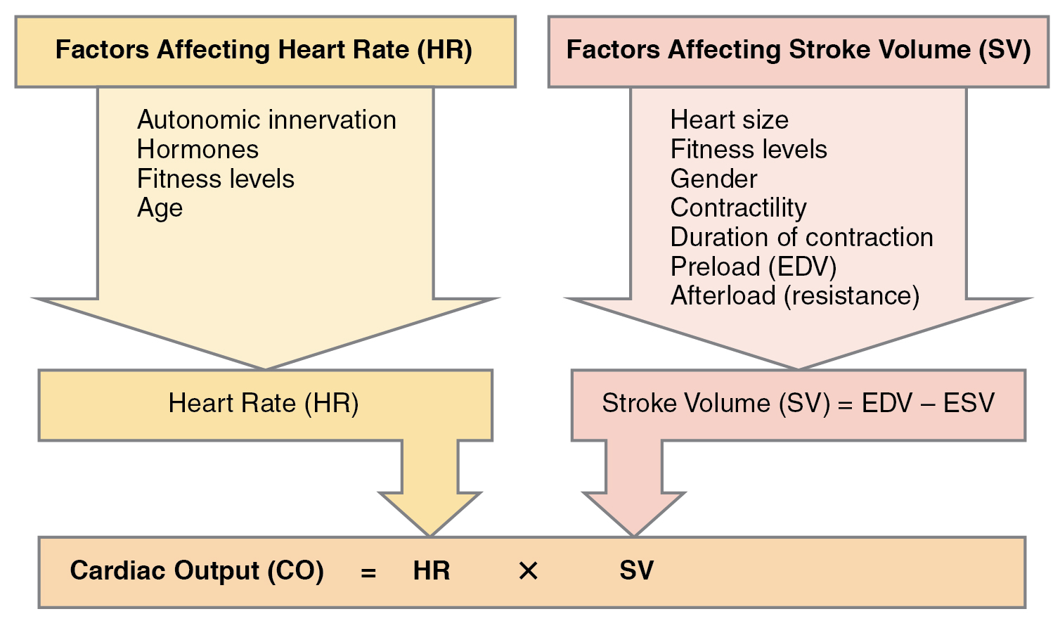 venous return and cardiac output relationship
