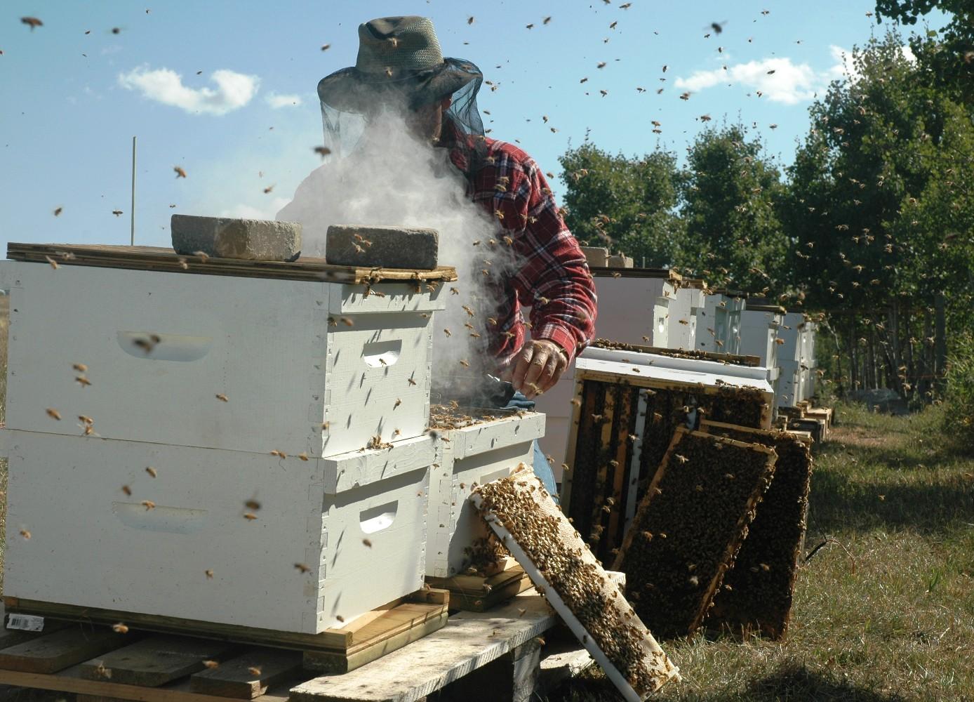 File:Beekeeper.jpg - Wikimedia Commons