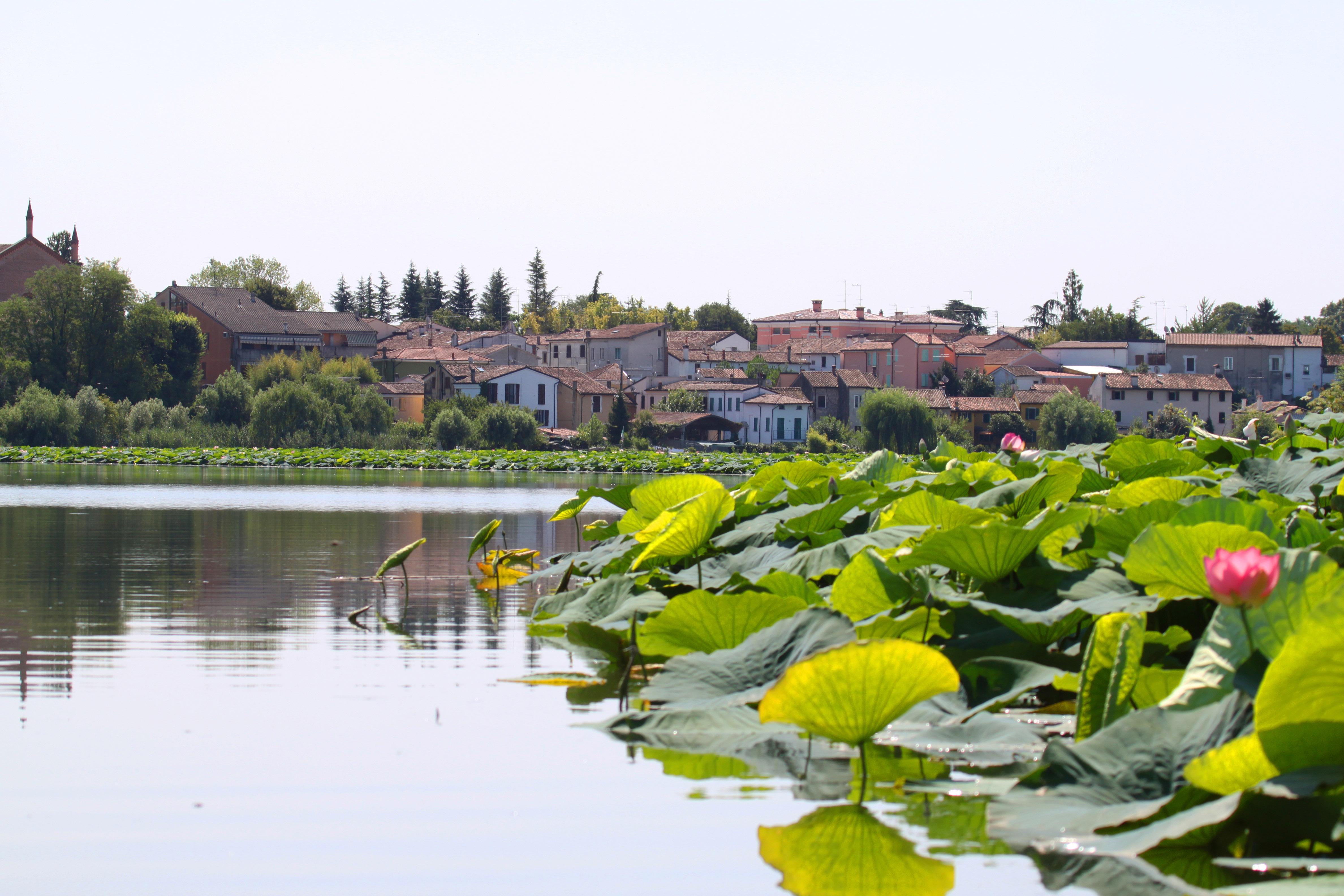 File Borgo Angeli E Fiori Di Loto Panoramio Jpg