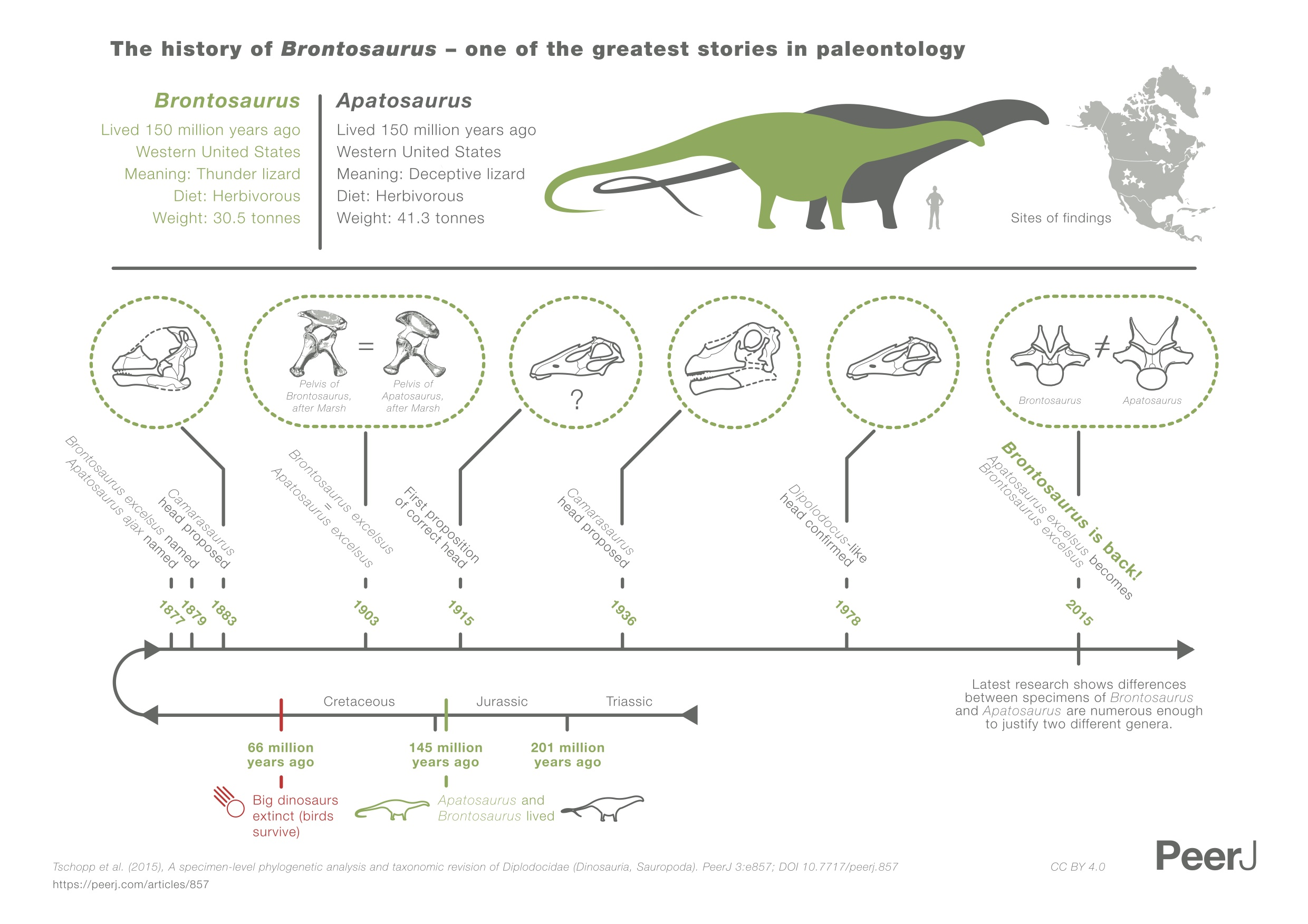 Story Of An Hour Plot Diagram: Brontosaurus - Wikipedia,Chart