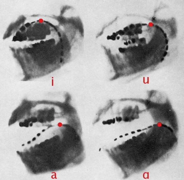 Pronuncia delle vocali ai raggi X