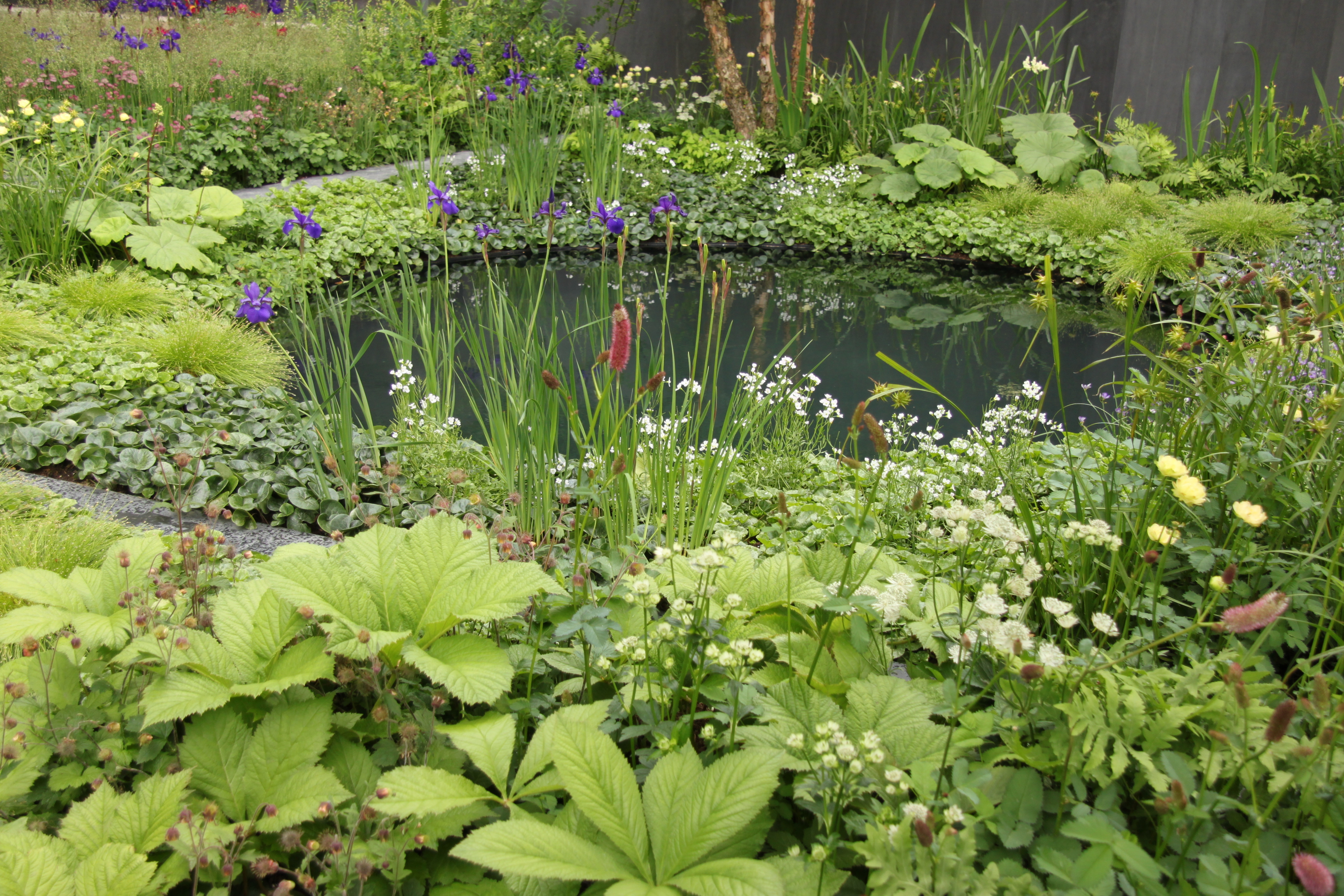 Dates of chelsea flower show 2014
