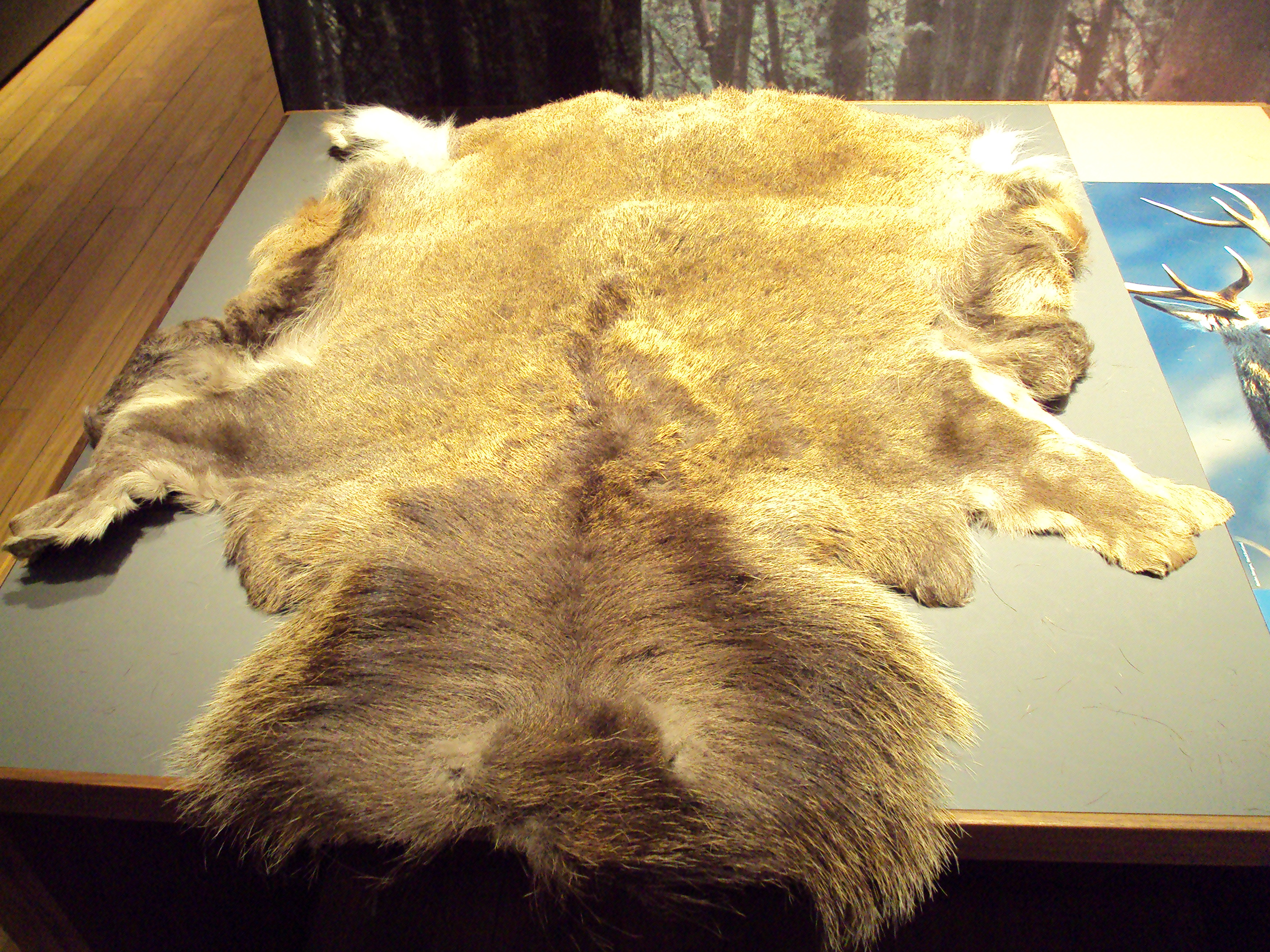 Buckskin Leather Wikipedia Deerskin