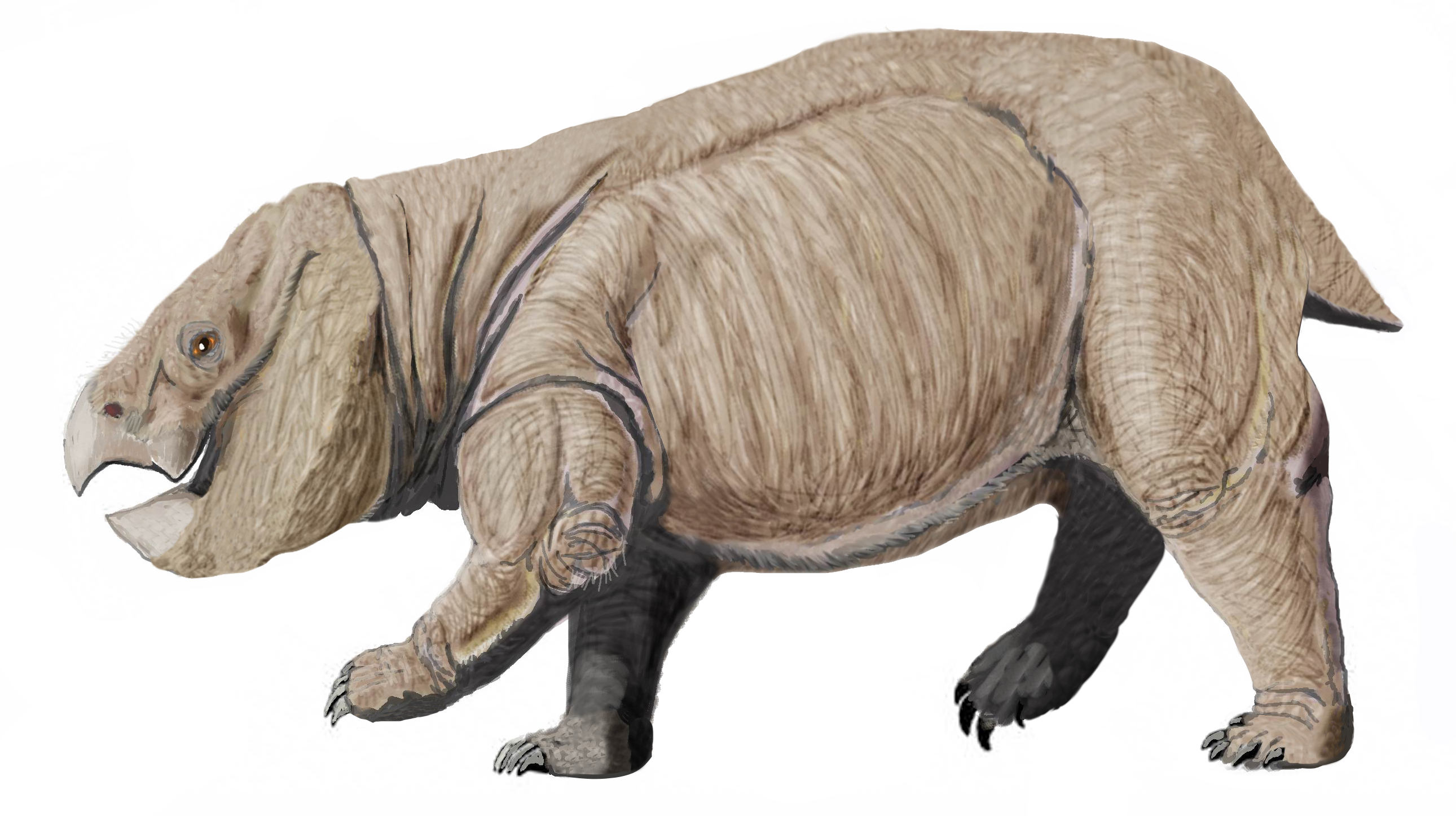 http://upload.wikimedia.org/wikipedia/commons/1/15/Dicynodont_from_PolandDB.jpg