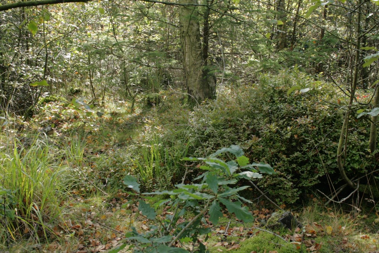 Description draved skov lysning3