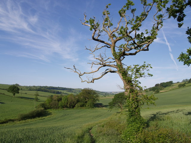 East Devon Way below Bulmoor - geograph.org.uk - 448581