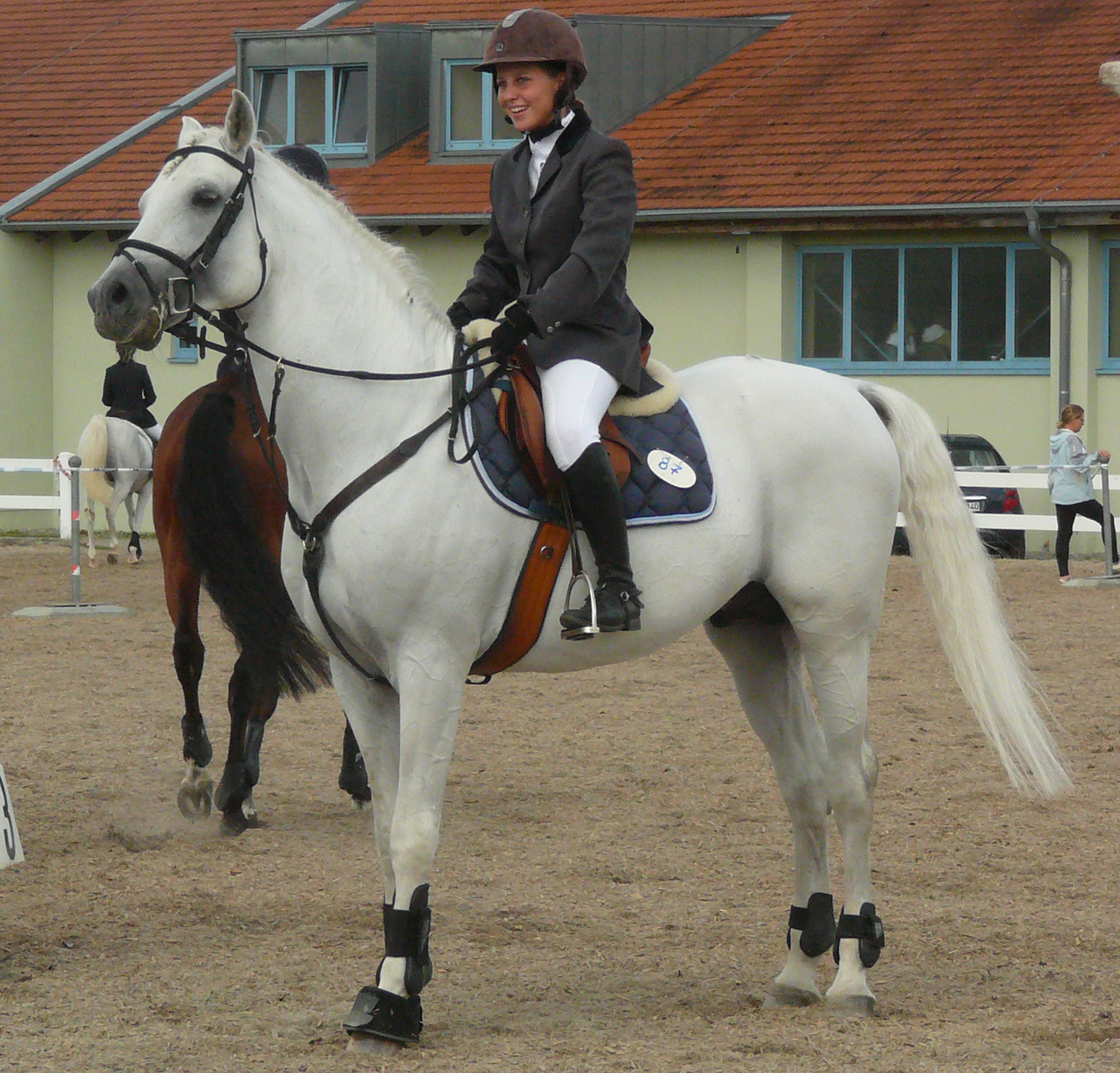 Hanoverian Dressage Horse For Sale