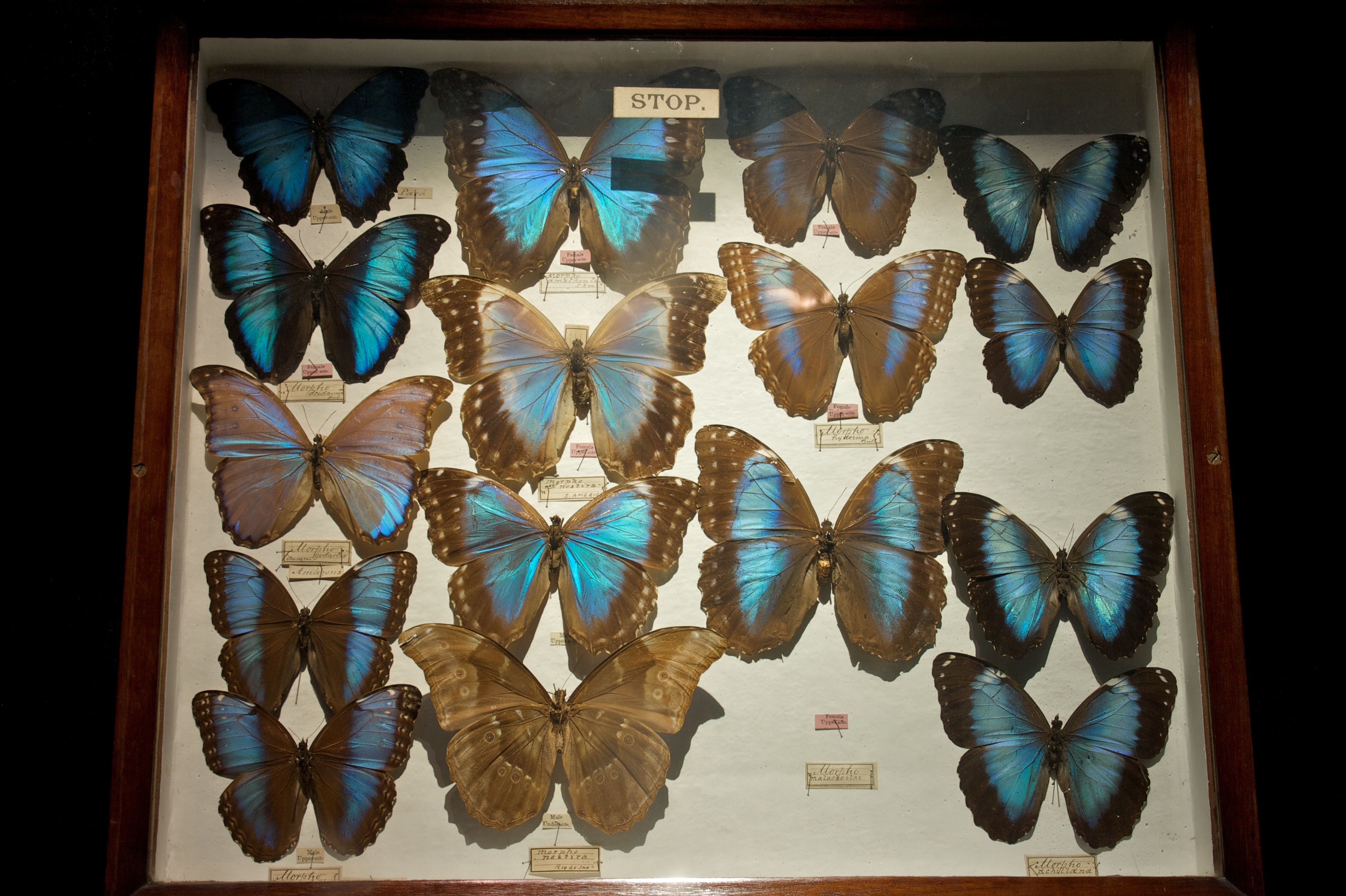 Exceptionnel File:Exotic Butterflies At The Horniman Museum 1