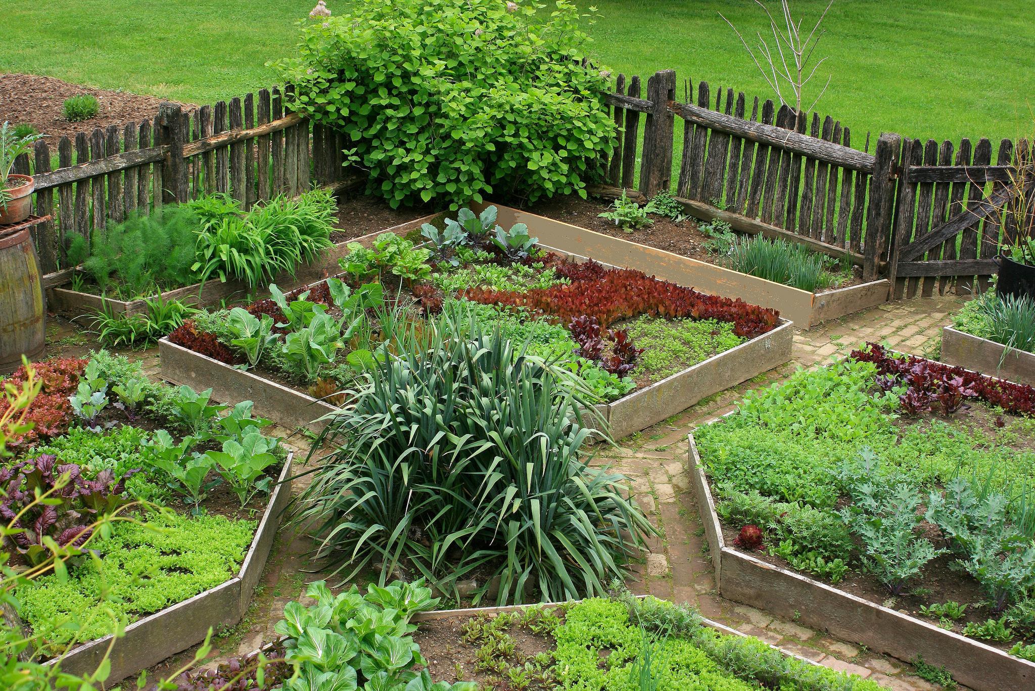 Backyard Farmers And Home Gardeners : FileFarm garden at the Hess Homesteadjpg  Wikimedia Commons