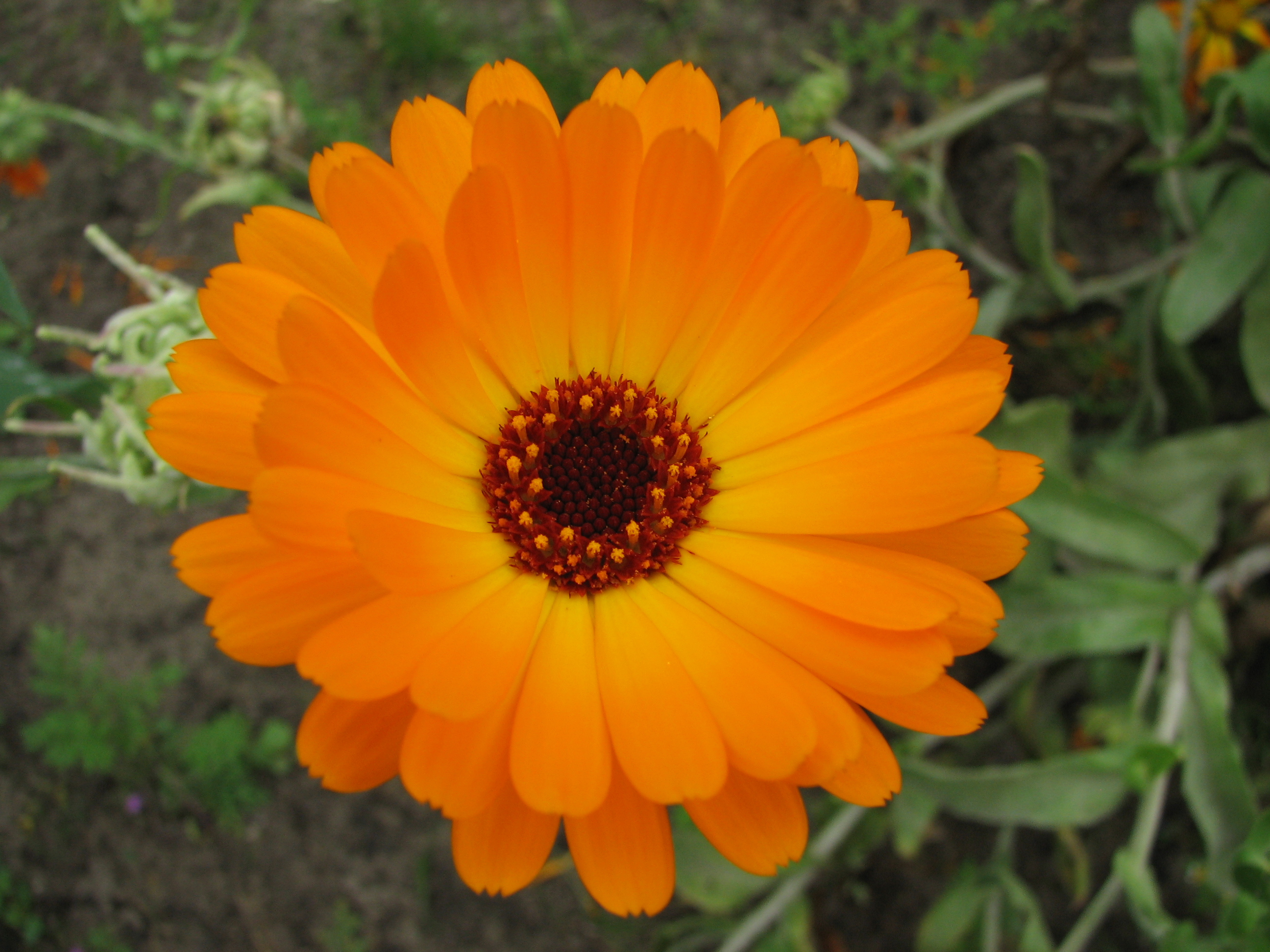 File Flower IMG 0314 JPG Wikimedia mons