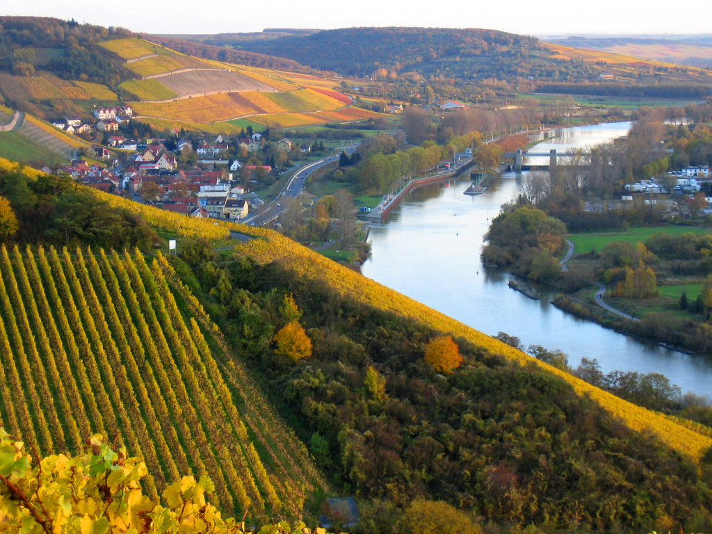 Rhine River Cruise Vineyards