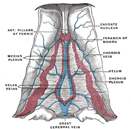 Great Cerebral Vein Wikipedia