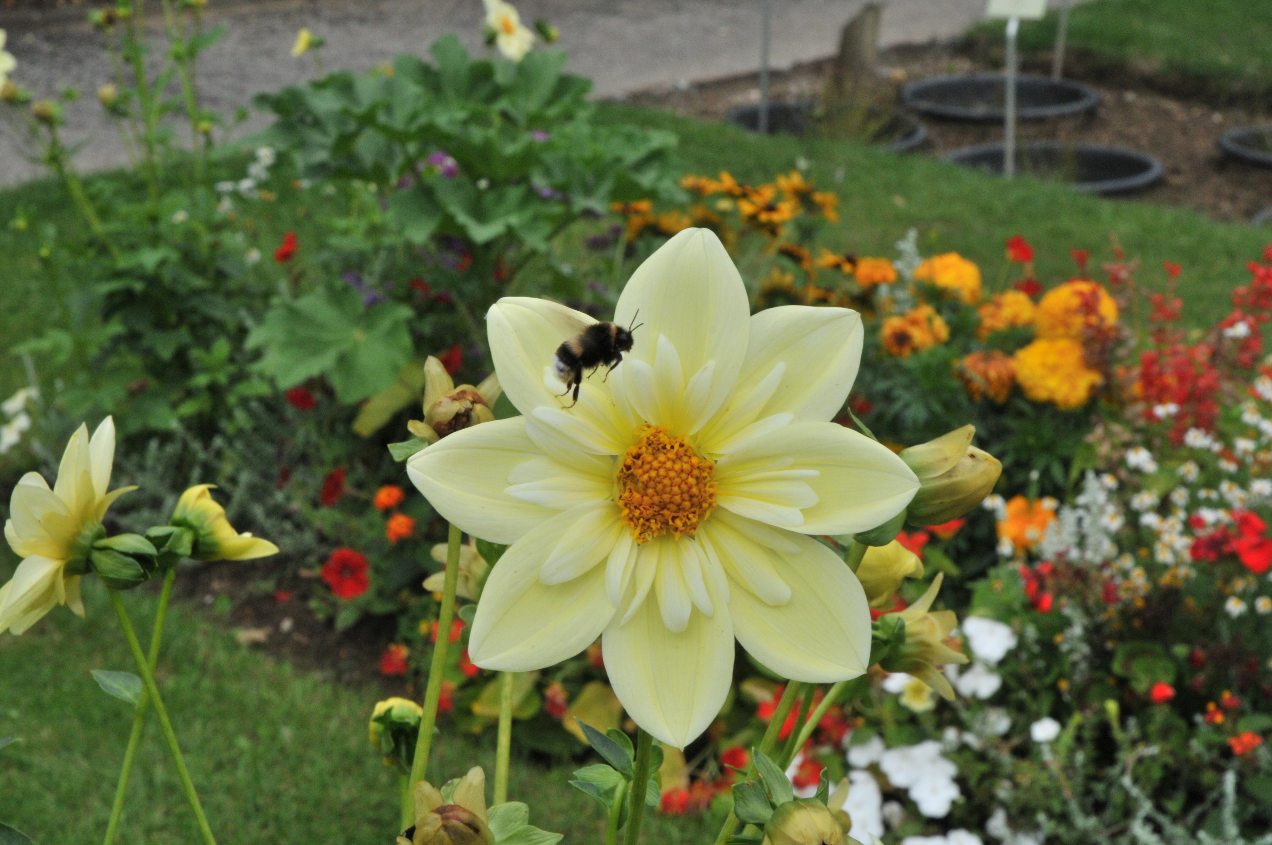 filejardin des plantes caen 79jpg - Jardin Des Plantes Caen